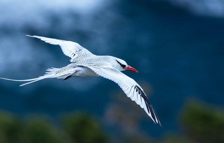 tropicbird - Ecuador Galapagos Islands Private Adventure