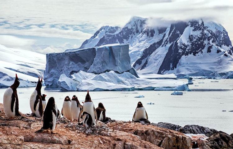 gentoo - Antarctica In Search of the Emperor Penguin Adventure Cruising