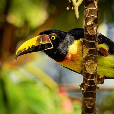 Ecuador Rainforest, Andes to the Sea Multi-Adventure