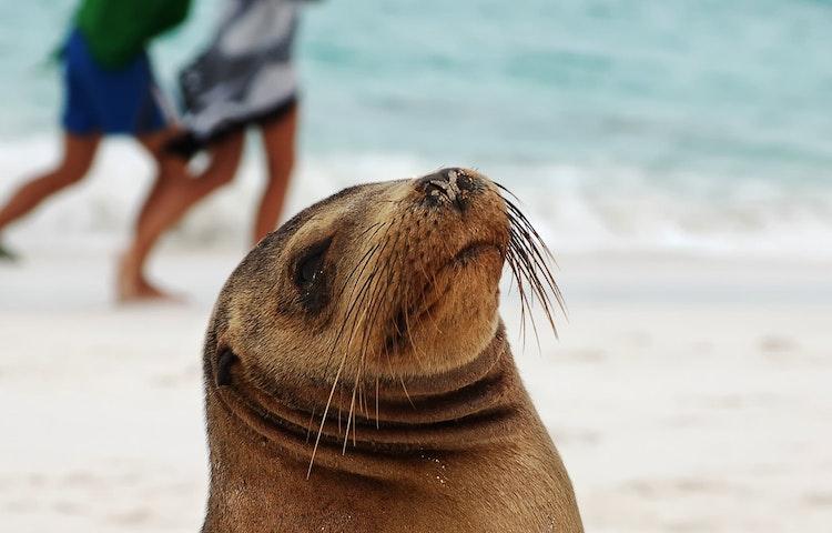 kids rining past sea lion - Ecuador Galapagos Island Family Adventure Cruise