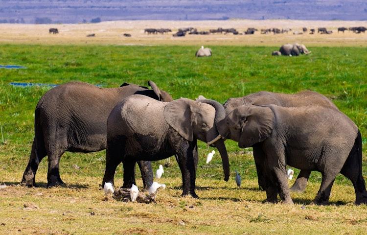 elephants - Tanzania and Kenya Classic Safari Private Adventure