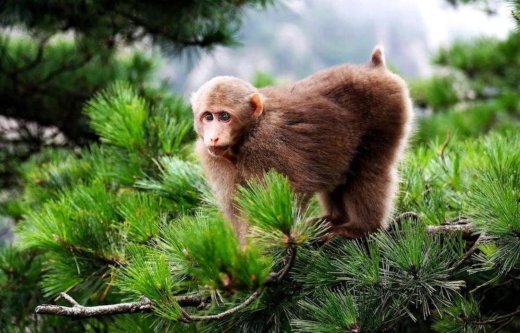 monkey - China: Yosemite Sister Parks Hiking
