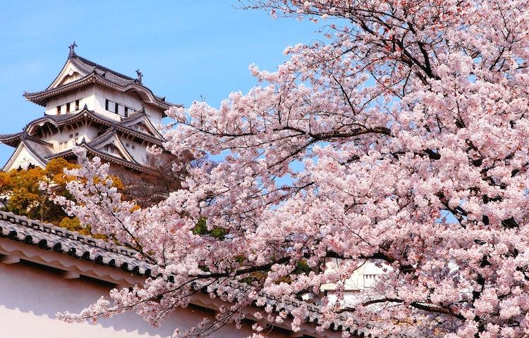 blossom temple