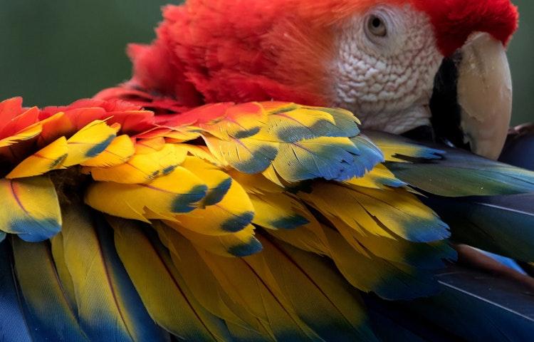 macaw closeup - Costa Rica Private Family Adventure