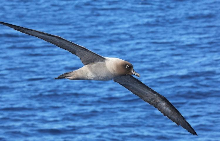 bird - Antarctica In Search of the Emperor Penguin Adventure Cruising