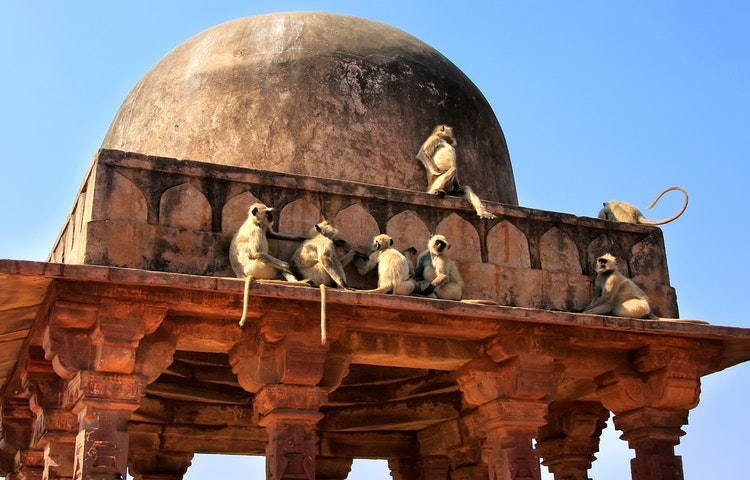 monkeys on palace - India & Nepal Save the Tiger