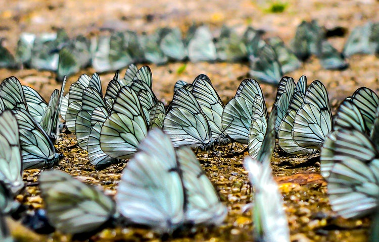 butterflies - Brazil Amazonas Wildlife River Cruise