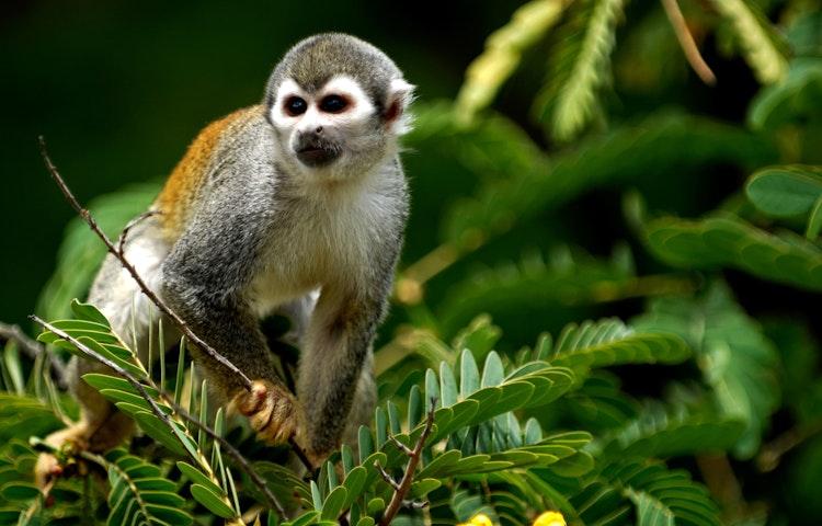 monkey - Brazil Amazonas Wildlife River Cruise