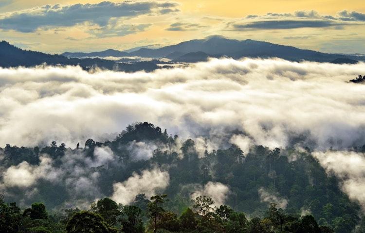 misty forest - Borneo Rainforests & Villages Wildlife Safari