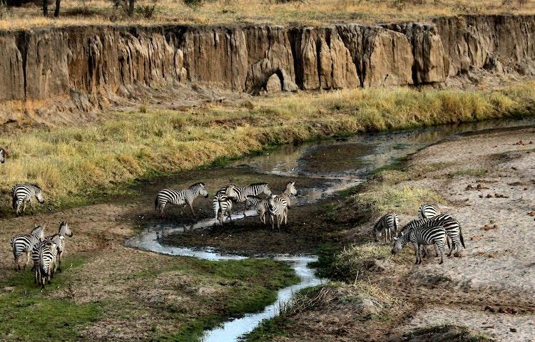 tarangire zebras - Tanzania and Kenya Classic Safari Private Adventure