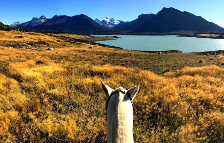 horse head - Argentina Patagonia & Lake District Multi-Adventure