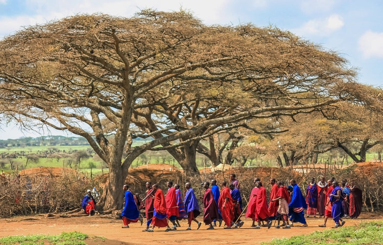maasai and acacia - Tanzania Ultimate Serengeti Active Safari