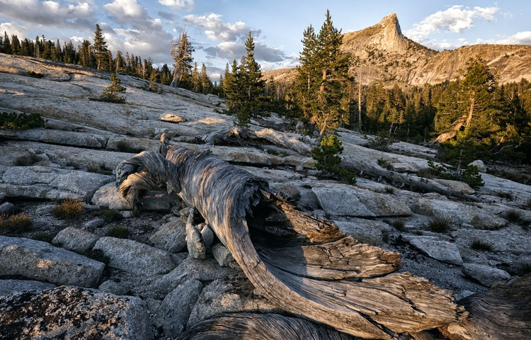 cathedral peak and log