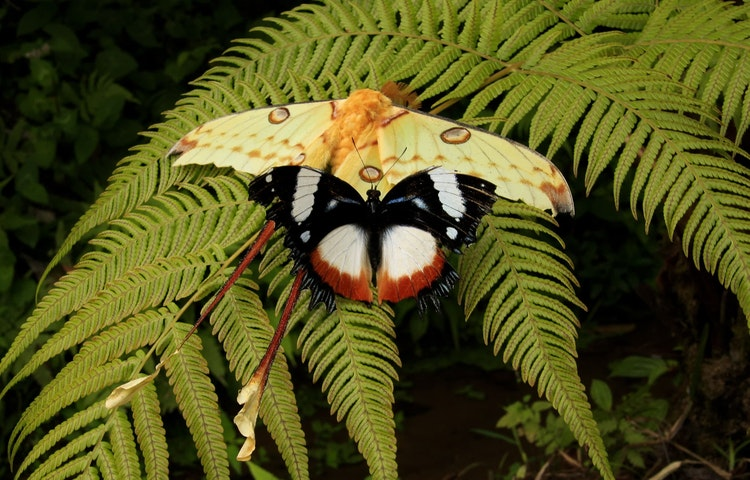 moths - Madagascar Baobabs & Lemurs Active Safari Private Adventure