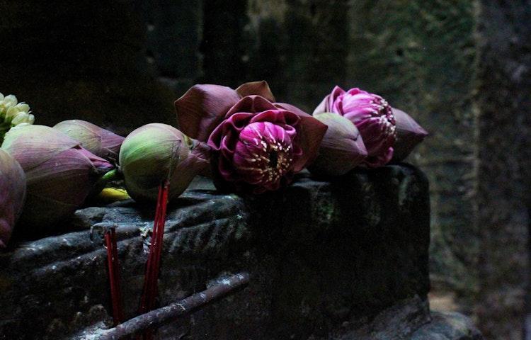 dark lotus buds - Laos, Cambodia & Vietnam Indochine Cultural Discovery