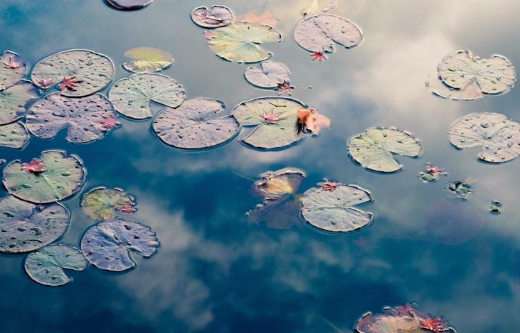 pond - Sacred Lakes & Mountains of Northern Japan