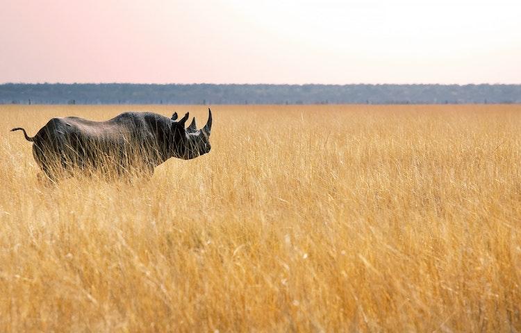rhino - Tanzania Ultimate Serengeti Active Safari
