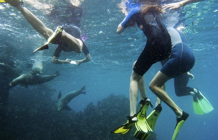 snorkelers and sea lions - Ecuador Galapagos Island Family Adventure Cruise