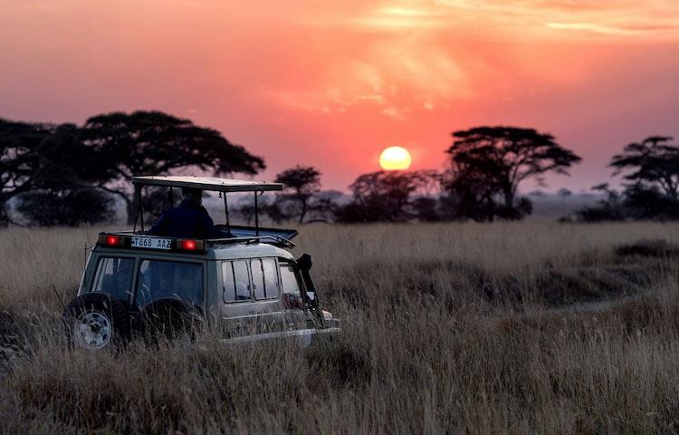 sunset game drive - Tanzania Ultimate Serengeti Active Safari