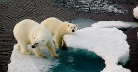 Norway North Spitsbergen Polar Bears & Pack Ice Adventure Cruising