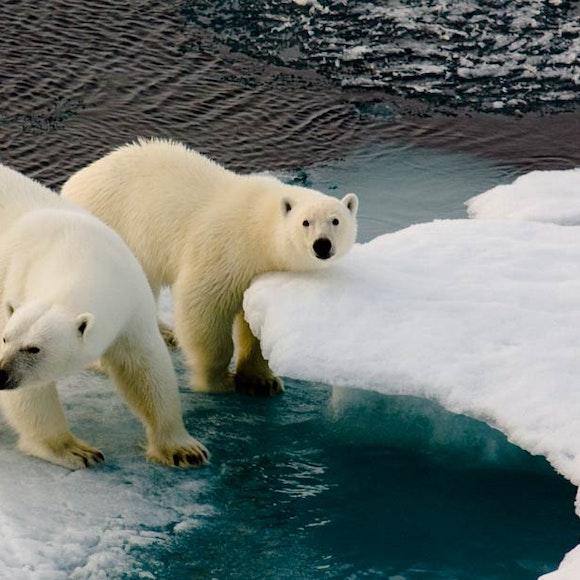 Norway North Spitsbergen Polar Bears & Pack Ice Adventure Cruising   MT Sobek