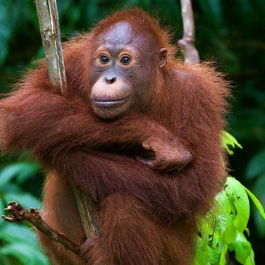 Borneo Rainforests & Villages Wildlife Safari