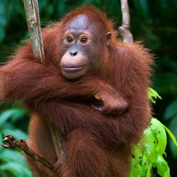 Borneo Rainforests & Villages Wildlife Safari | MT Sobek