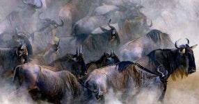 Tanzania Ultimate Serengeti Active Safari