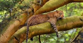 Tanzania and Kenya Classic Safari Private Adventure