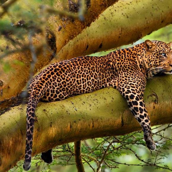 Tanzania and Kenya Classic Safari Private Adventure | MT Sobek