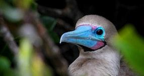 Ecuador Galápagos Adventure Cruise on Galaxy