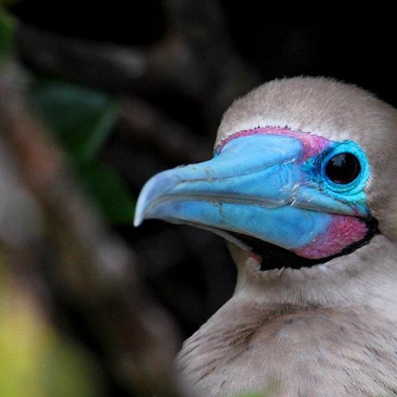 Ecuador Galápagos Adventure Cruise on Galaxy | MT Sobek