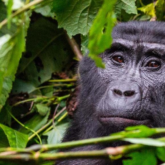 Rwanda Primate Adventure   MT Sobek