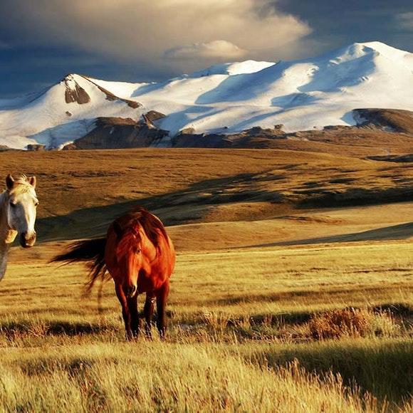 Mongolia Horse Trek   MT Sobek