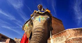 India Royal Rajasthan & Pushkar Camel Fair