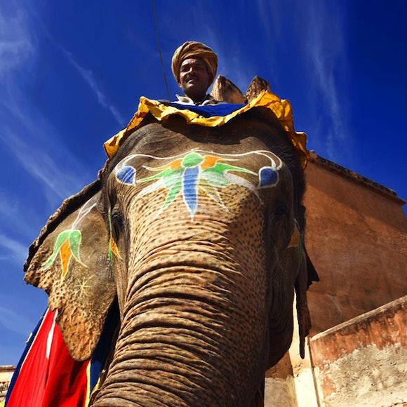 India Royal Rajasthan & Pushkar Camel Fair   MT Sobek