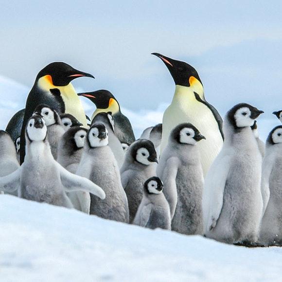 Antarctica In Search of the Emperor Penguin Adventure Cruising   MT Sobek