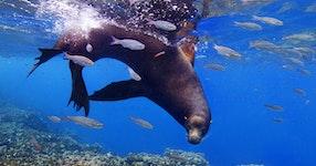 Ecuador Galapagos Adventure Cruise on the Integrity