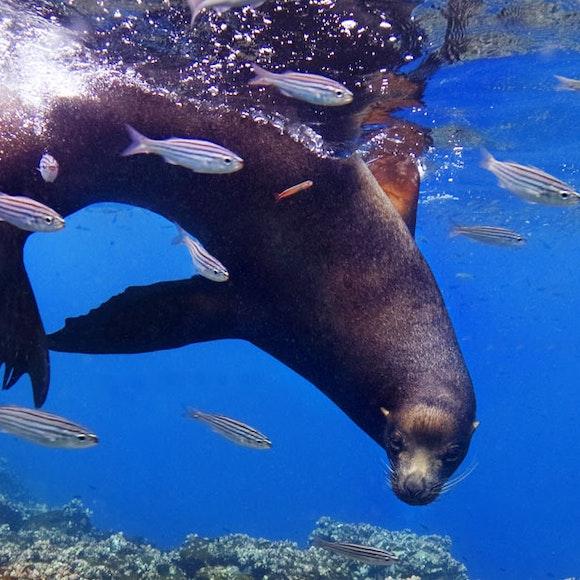 Ecuador Galapagos Adventure Cruise on the Integrity | MT Sobek