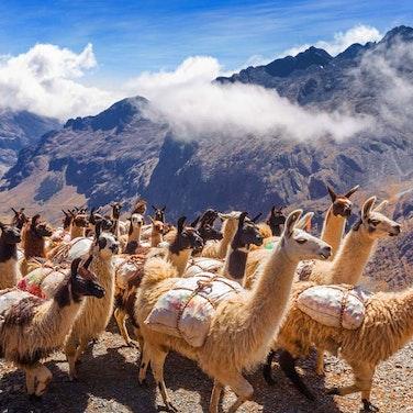 Bolivia Cordillera Real Trek