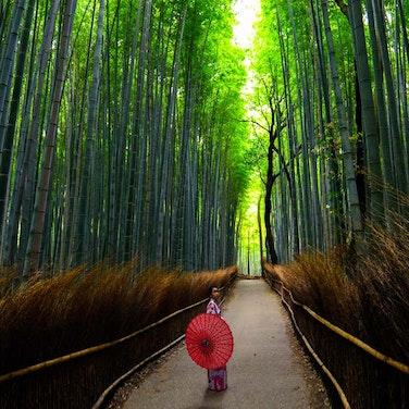 Japan Kyoto to Tokyo Walking